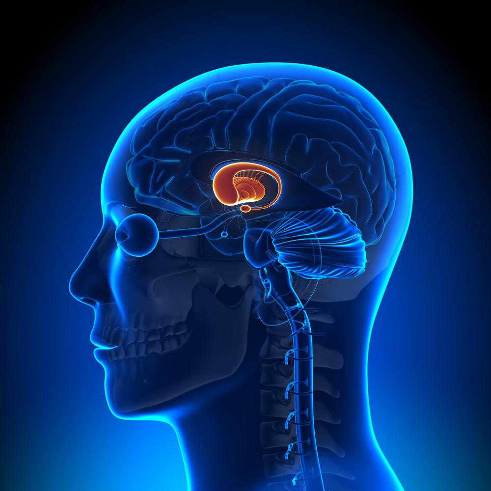 Het Brein Bij De Zvh Groter Dan De Som Van Zijn Delen